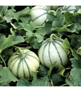 Melón Charentais Cantaloupe (Semillas no tratadas)