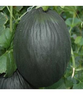 melón tendral negro - semillas ecológicas