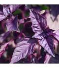 Albahaca morada (Semillas Ecológicas)