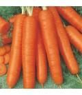 zanahoria bambino (semillas ecológicas)