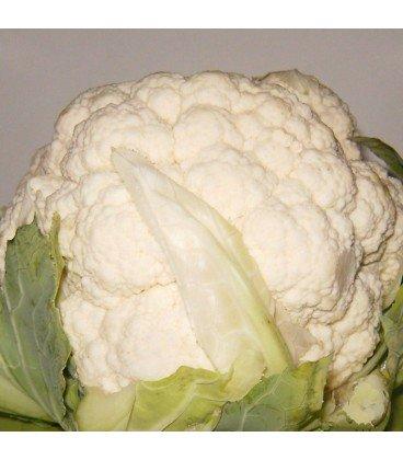 coliflor snowball - semillas ecologicas