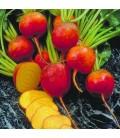 remolacha golden (semillas ecológicas Naturnoa)