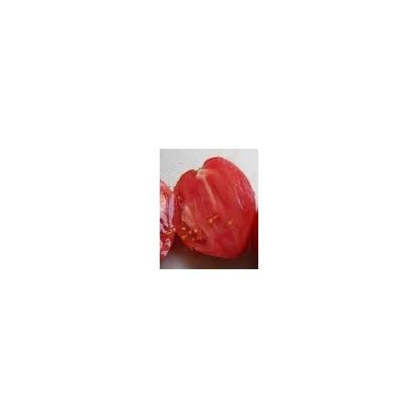 semillas de tomate corazón de buey