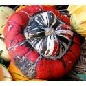 calabaza giraumon turban - turbante turco (semillas ecológicas)