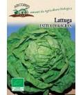 lechuga kagraner sommer 2 - semillas ecológicas
