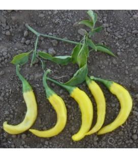 pimiento picante cayena dorada - semillas ecológicas