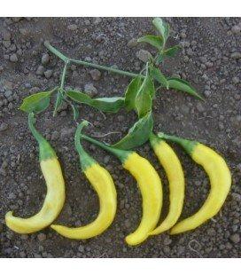 pimiento picante cayena dorada - semillas no tratadas