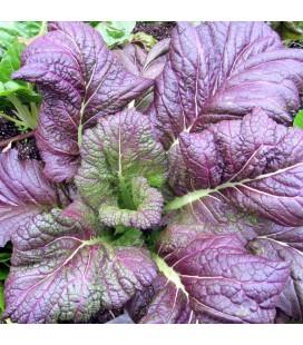 mostaza de hoja ancha roja - semillas ecológicas