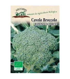 brocoli calabrese medio tardío - semillas ecológicas