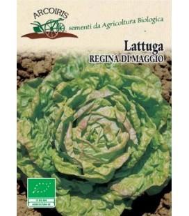 lechuga reina de mayo - semillas ecológicas Arcoiris