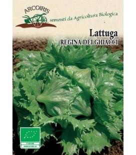 lechuga reina del hielo semillas ecológicas Arcoiris