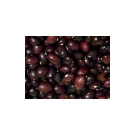 semillas de alubia carico montañes