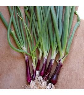 Cebollino Japonés Rojo (Welsh Onion) Naturnoa