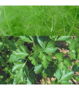 perejil común (semillas ecológicas Naturnoa)