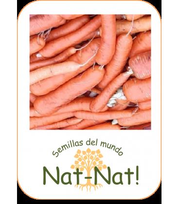 zanahoria berlicum