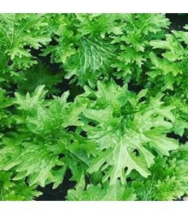 wasabino (Brassica juncea) sin tratamiento