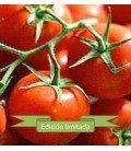 tomate Ailsa Craig - semilla no tratada