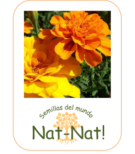 tagete doble enano bonita (Tagetes patula nana)