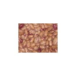 semillas de alubia pinta de Leon