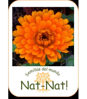 calendula doble naranja (Calendula officinalis)