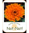 calendula naranja doble (Calendula officinalis)