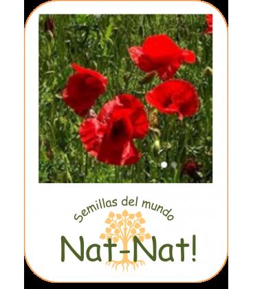 amapola silvestre (Papaver rhoeas) - semillas