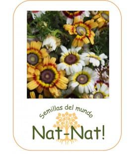 crisantemo Merry mix (Chrysanthemum carinatum)