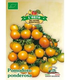 tomate de colgar ponderosa (semillas ecológicas)