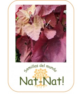 armuelle rojo -bledos- (Atriplex hortensis)