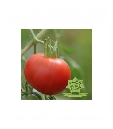 tomate carnicero sangriento