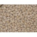 semillas de alubia arrocina