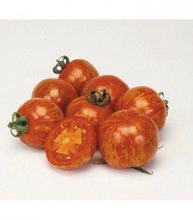 Tomate red zebra f1