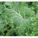 semillas de Kale Siberian