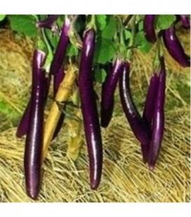 Berenjena farmers long F1 - semillas sin tratamiento