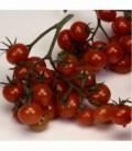 Tomate Christmas Grapes