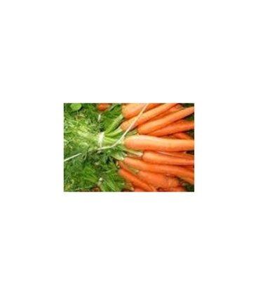 semillas de zanahoria nantesa