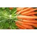 zanahoria nantesa 2 sel. Dangers