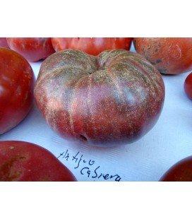 Tomate antiguo de la Cabrera - planta