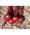 remolacha detroit 2 Bolivar - semillas sin tratamiento
