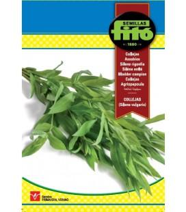 semillas de collejas (silene vulgaris)