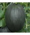 plantel melon