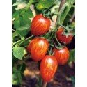 semillas de tomate cherry cebra F1