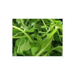 planta de rucula en maceta de 11 cm