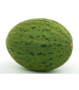 melón piñonet semillas no tratadas