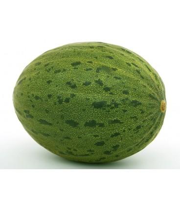 melon piñonet