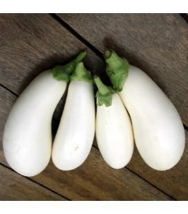 berenjena huevos blancos - semillas no tratadas