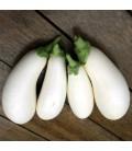 berenjena huevos blancos