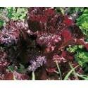semillas de lechuga terciopelo rojo