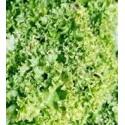 semillas de lechuga lollo bionda