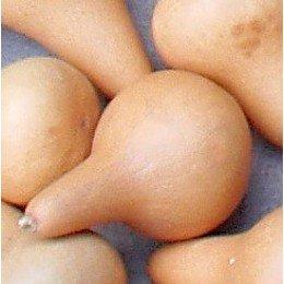 semillas de calabaza del peregrino